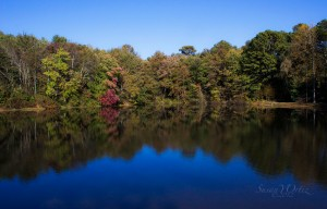 Photo of Lake surrounded by Autumn Leaves